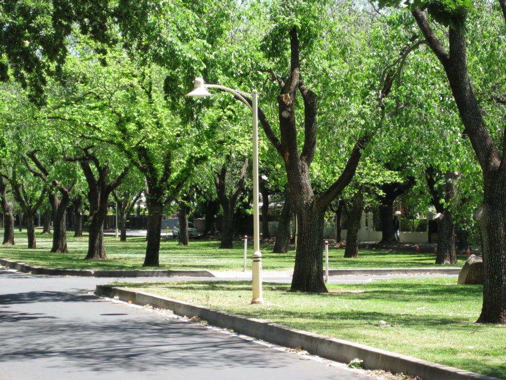 Rose Park, Adelaide
